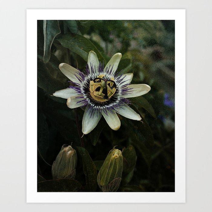 Passiflora Incarnata Art Print By Rotatingvoodoo Society6