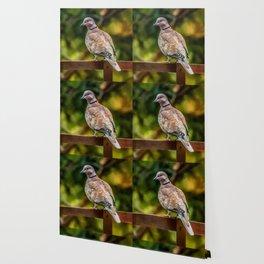 Collared Dove Wallpaper