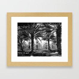 Vintage Palms Trees : Coachela Valley California 1937 Framed Art Print