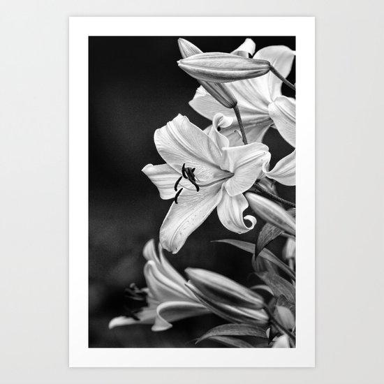 Day Lily, Art Print