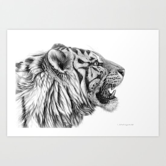 White Tiger Profile Art Print