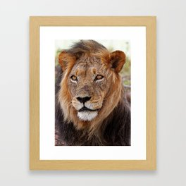Big lion - Africa wildlife Framed Art Print