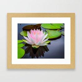 Pink Lotus & Green Lily Pads On A Jet Black Pond Framed Art Print