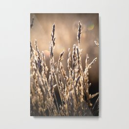 blade of grass Metal Print