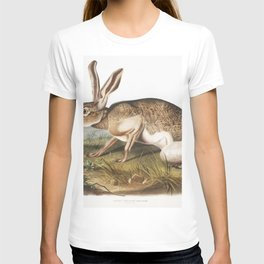 Texian Hare (Lepus Texianus) from the viviparous quadrupeds of North America (1845) illustrated by J T-shirt