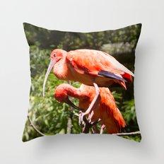 Eudocimus Ruber Throw Pillow