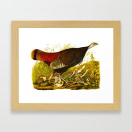 Great American Hen Framed Art Print