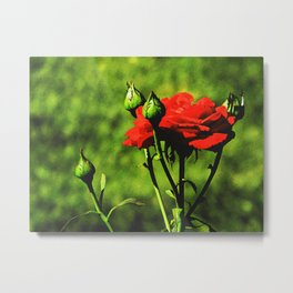 A Kiss from a Rose Metal Print