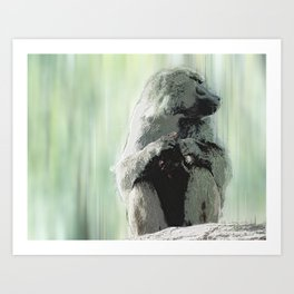 Baboon Distractions Art Print