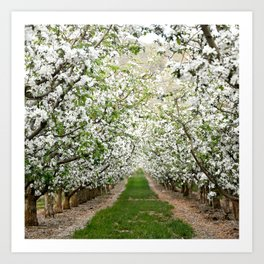 Orchard in Bloom Art Print