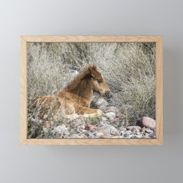 Salt River Colt Taking a Rest Framed Mini Art Print