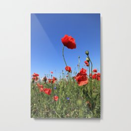 poppy flower no15 Metal Print