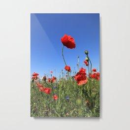 poppy flower no15 Metal Print