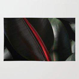 Ficus Elastica with black Rug