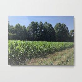 Corn Fields Metal Print