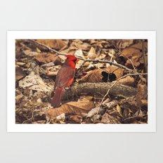 Bird of Ohio Art Print