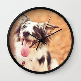 Australian Shepherds rule Wall Clock