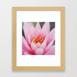 Lily 1 Framed Art Print