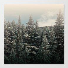 pine tree tops Canvas Print