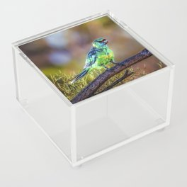 Mallee Ringneck Parrot Acrylic Box