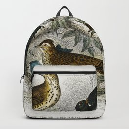 Song Thrush Ring Ouzel Blackbird Wheat Ear Sky Lark and Redbreast from A history of the earth and an Backpack