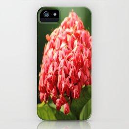 West Indian Jasmine iPhone Case