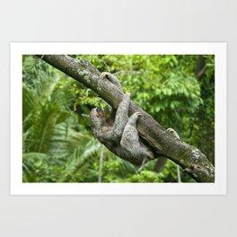 Three-toed sloth climbing tree Art Print
