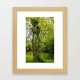 The Lost Gardens of Heligan - Grey Lady Framed Art Print