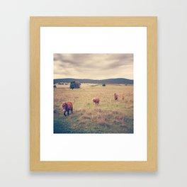 Ponies in the hills Framed Art Print