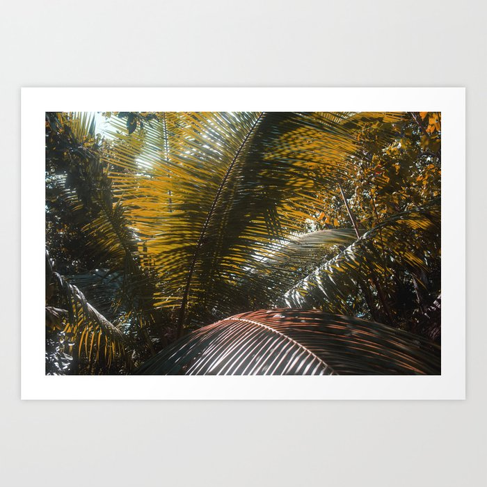 Into the Seychellian leaves Art Print