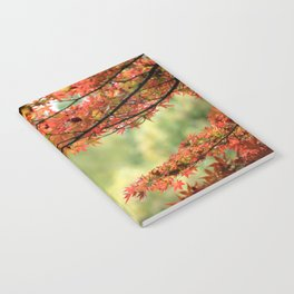 Japanese Maple Tree and Leaves in Fall Garden Photography Notebook
