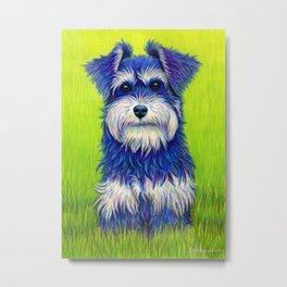 Curiosity - Colorful Miniature Schnauzer Dog Metal Print