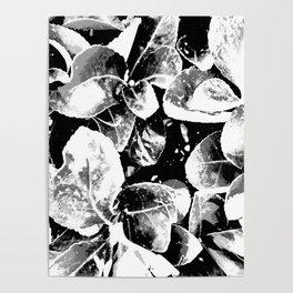 Foliage II Poster