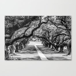 Louisiana Path Through the Oaks Canvas Print