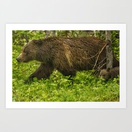 Keeping Up with Mama Grizzly 399 Art Print