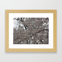Tidal Basin Blossoms Framed Art Print