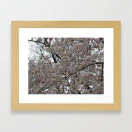 Tidal Basin Blossoms Framed Art Print