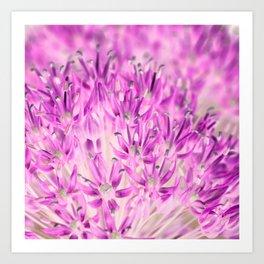 Allium Inversion Art Print