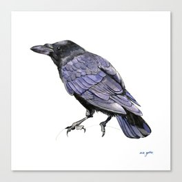 Crow Watercolor and Ink Illustration Canvas Print