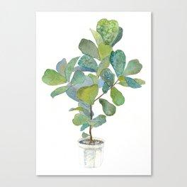 Fiddle Leaf Fig Tree Canvas Print