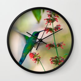 Jamaican Hummingbird Drinking Nectar (macrophotography) Wall Clock