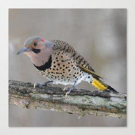 Fabulous Flicker Woodpecker Canvas Print