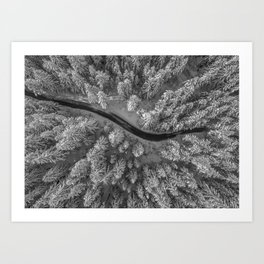 Snow pine forest Art Print