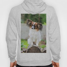 Outdoor portrait of a papillon purebreed dog Hoody