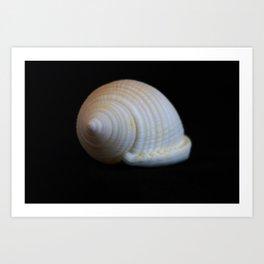 Sea Shell on Black V Art Print