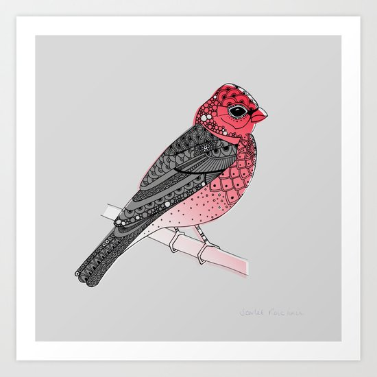Scarlet Rosefinch Art Print