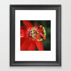 Passiflora vitifolia Scarlet Red Passion Flower Framed Art Print