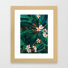 Frangipanis Framed Art Print