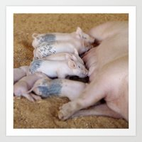 piglet Art Prints featuring Piglet Lunch by Tiffany Dawn Smith
