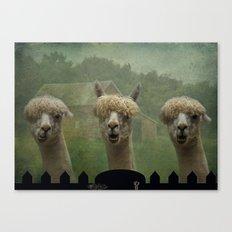 Alpaca Farm Canvas Print
